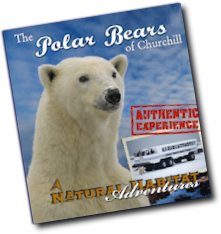 2012 polar bear tour catalog